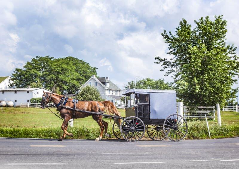 Un cheval tirant un chariot à travers un beau paysage de Saskatchewan images stock
