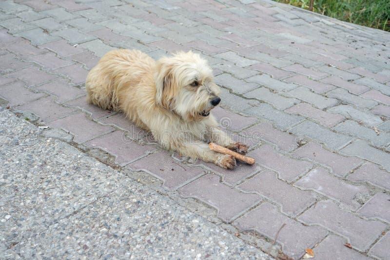 Un chien égaré fatigué se trouvant sur la route photographie stock libre de droits