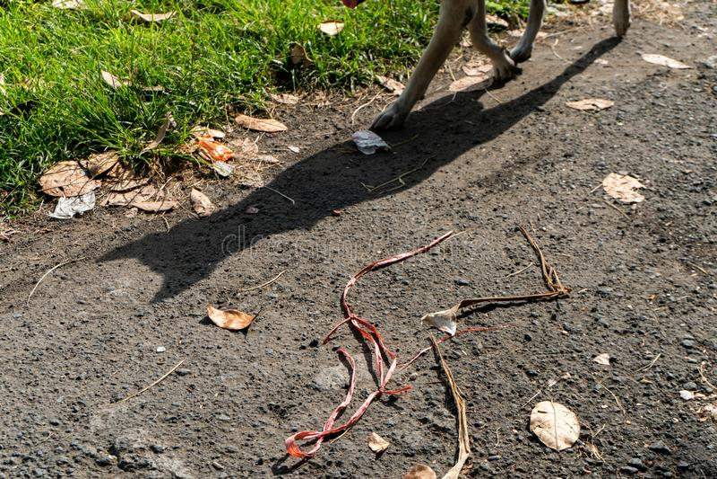 Un chien avec son ombre traverse une route goudronnée chaude à côté d'une pelouse verte photos stock