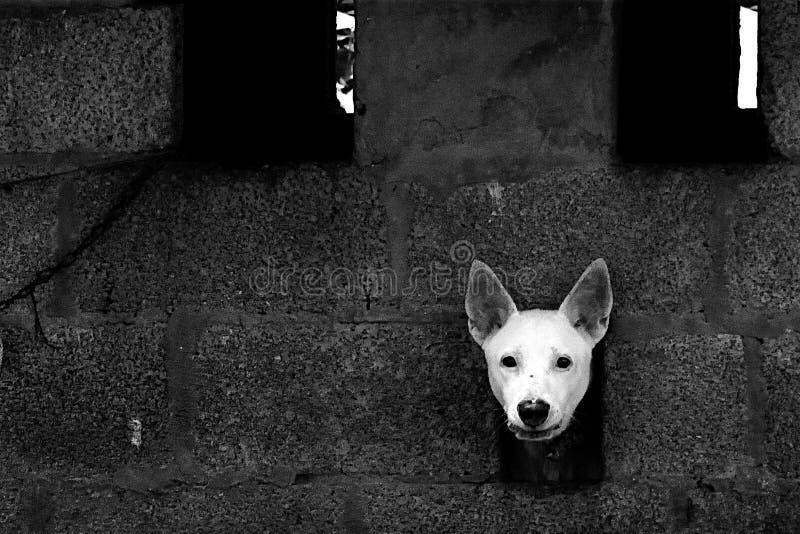 Un chien blanc images stock
