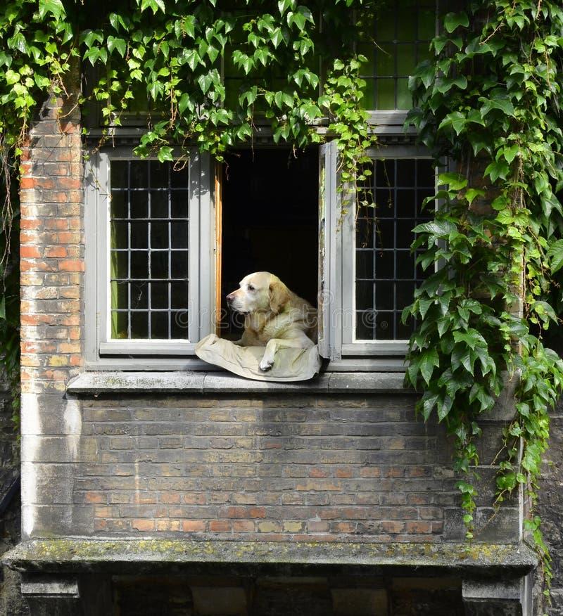 Un chien dans le Bruge photographie stock