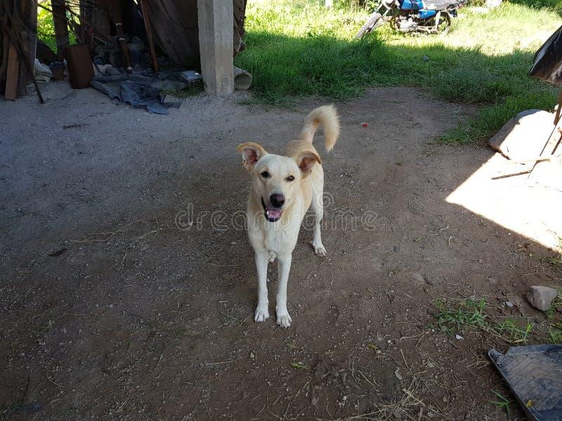 Un chien dans le ranch photo libre de droits