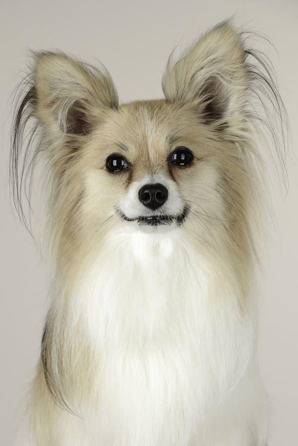 Un chien de sourire image libre de droits