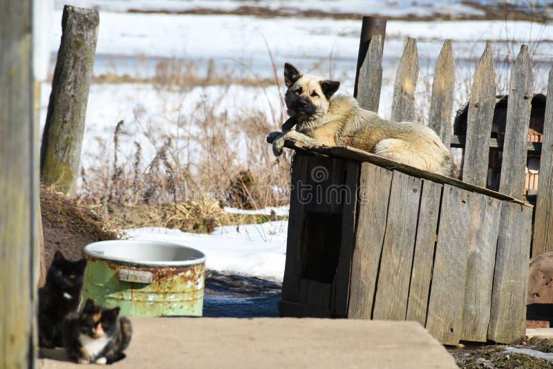 Un chien domestique se trouve sur un chenil près d'une maison en bois privée dans le village image stock