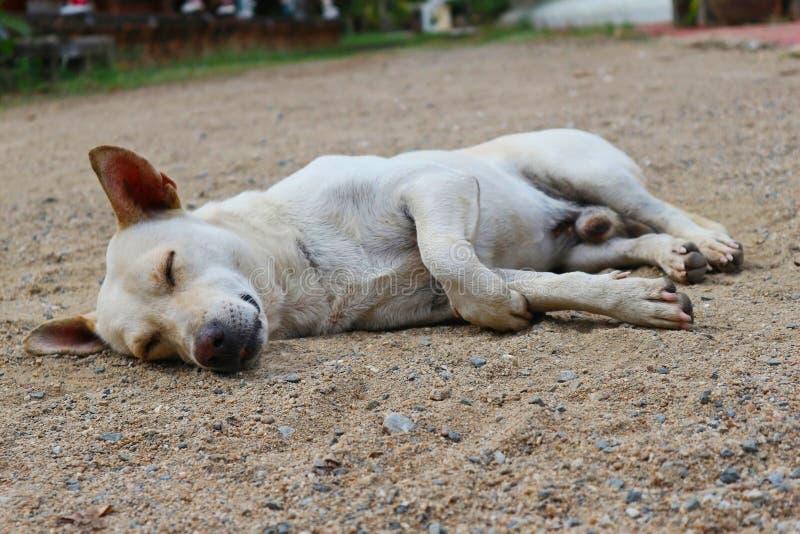 Un chien dormant au sol photos stock