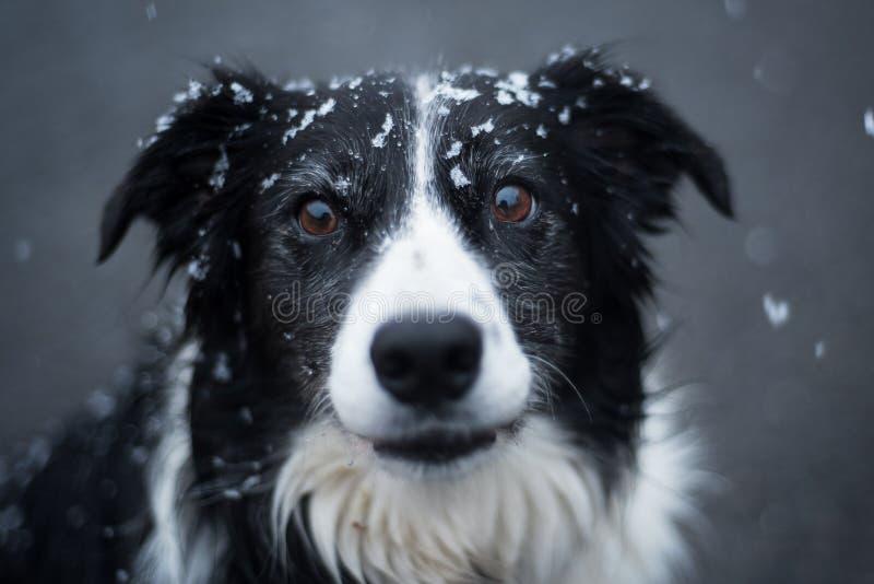 Un chien dramatique sous la neige image libre de droits