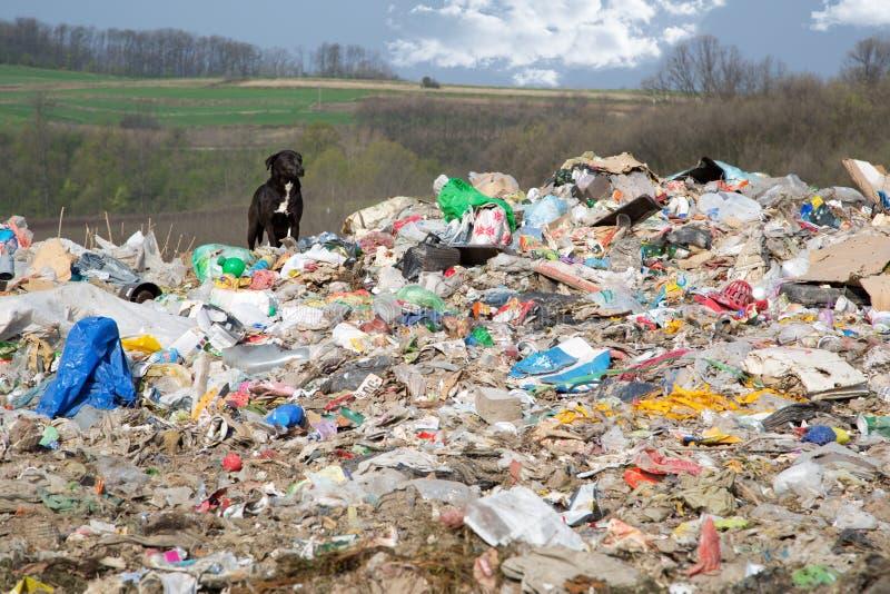 Un chien entre la nature polluée et la belle La photos stock