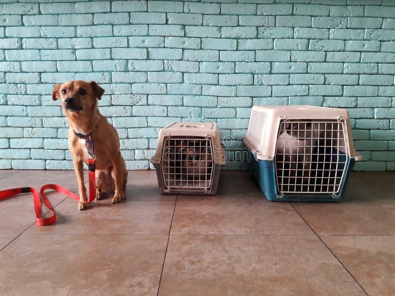 Un chien et deux chats visitant une clinique vétérinaire images libres de droits