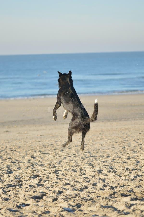 Un chien heureux sur la plage images stock