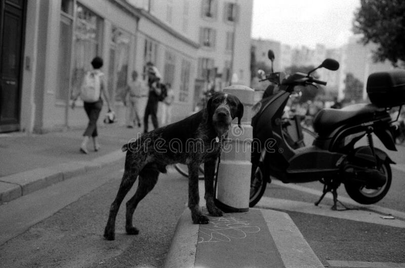 Un chien royalty free stock image