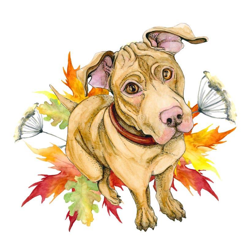 Un chien jaune de pitbull se repose Chiot mignon automne, feuilles, érable illustration libre de droits
