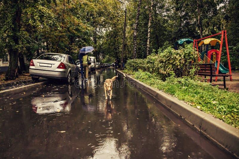 Un chien rouge fonctionne sur une route humide sous la pluie photos stock