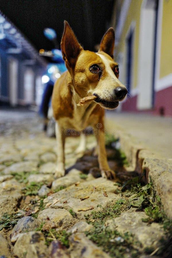 Un chien sur la rue du Trinidad, Cuba image libre de droits