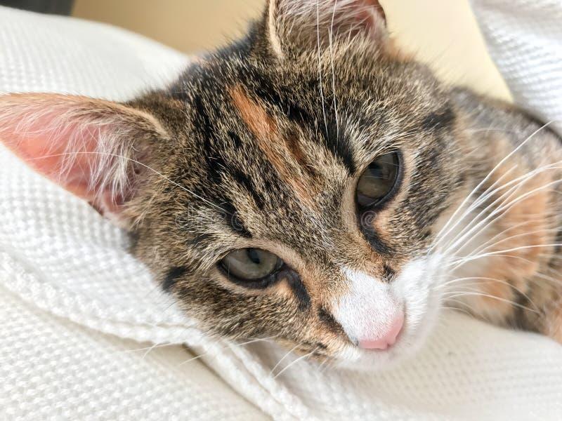 Un ciao amichevole da un piccolo gattino fotografia stock libera da diritti