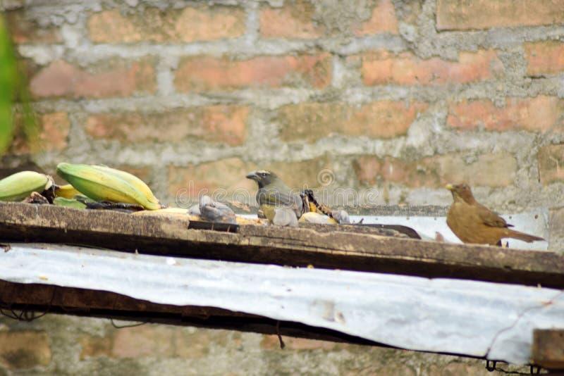 Un cibo di due uccelli fotografia stock libera da diritti