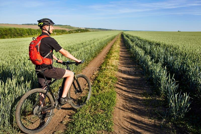Un ciclista atractivo en mountainbike en la trayectoria cerca de campos verdes en el campo en la estación de verano imagen de archivo