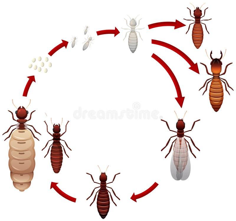 Un ciclo di vita della termite illustrazione vettoriale