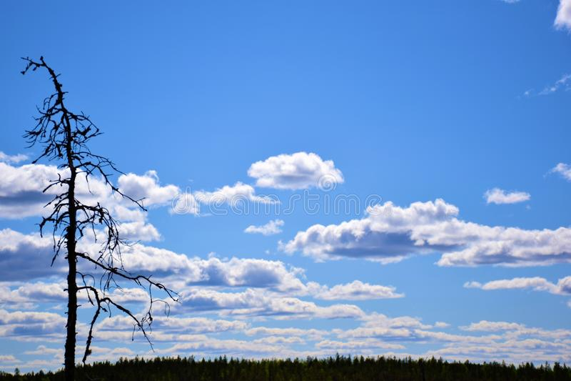 Un ciel bleu avec un arbre superficiel par les agents solitaire photo libre de droits
