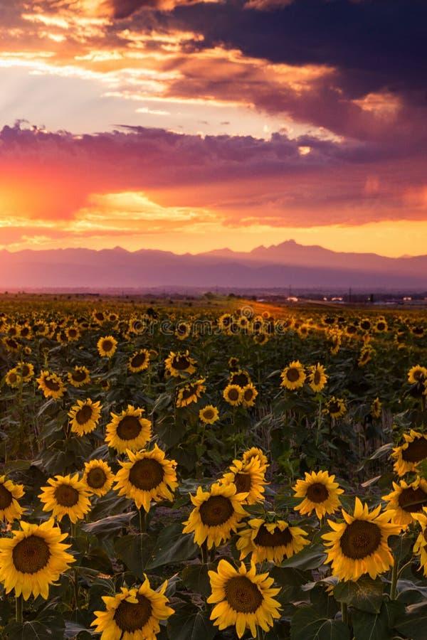 Un cielo di sera di Colorado fotografie stock libere da diritti