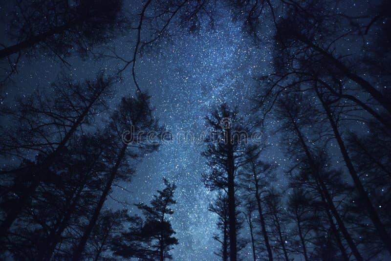 Un cielo nocturno hermoso, la vía láctea y   árboles foto de archivo libre de regalías