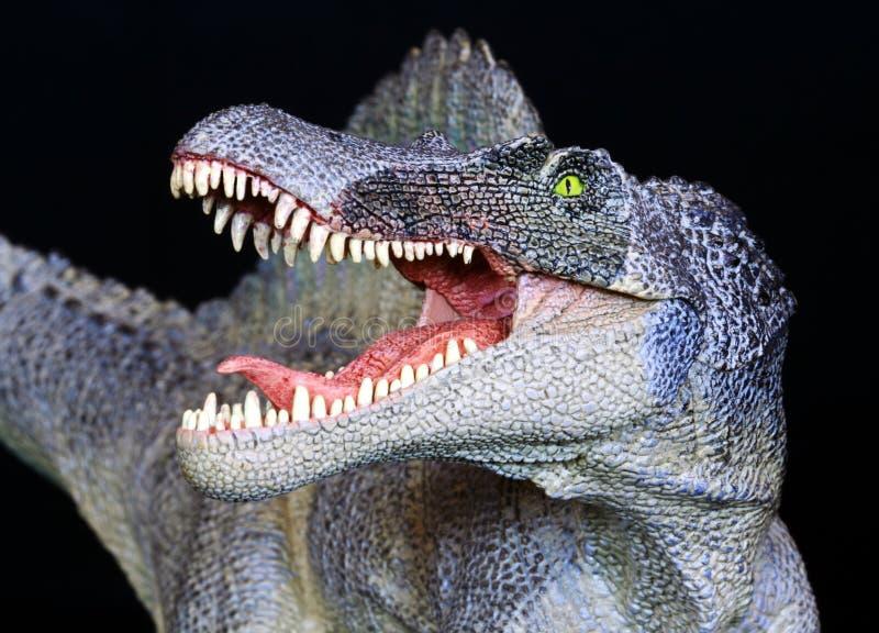 Un cierre del dinosaurio de Spinosaurus para arriba contra negro imagen de archivo