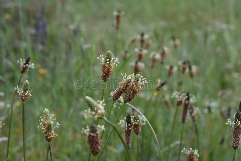 Un cierre encima de la foto de la floración de las flores imagenes de archivo