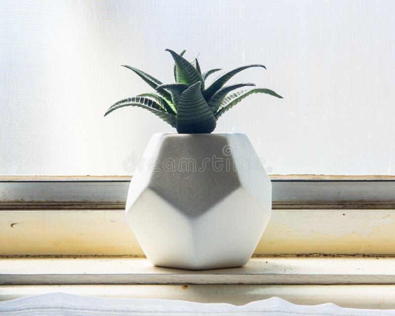 Un cierre encima del cactus en un pote de los cuadrados del diseño 8 con la iluminación natural de la ventana foto de archivo libre de regalías