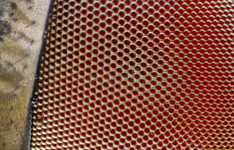 Extremo cercano para arriba de ojo de la mosca fotos de archivo