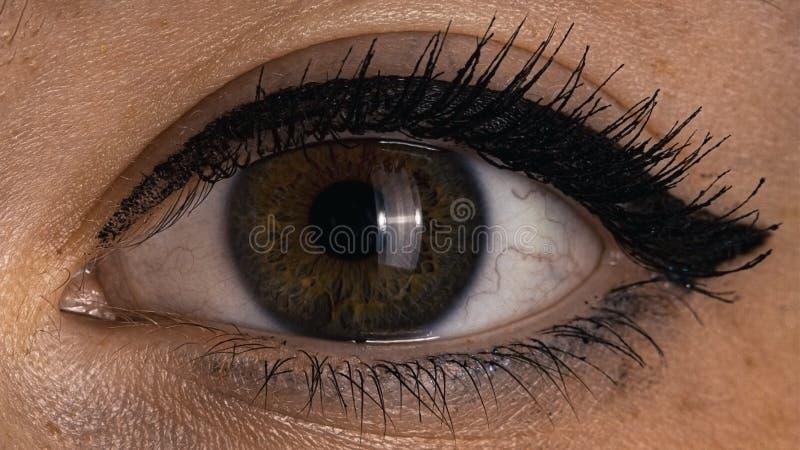 Un cierre femenino marrón verde humano del ojo para arriba fotos de archivo libres de regalías