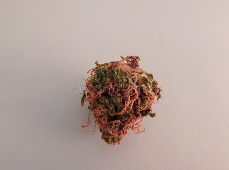 Un cierre macro para arriba de un solo brote de la marijuana con los cristales brillantes imagen de archivo libre de regalías