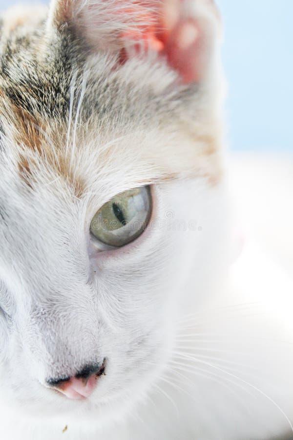 un cierre para arriba de un ojo de gato fotografía de archivo