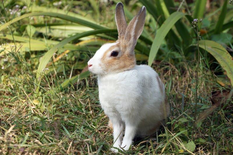 Un cierre para arriba del pequeño conejito lindo, conejo que se sienta en hierba verde fotos de archivo libres de regalías