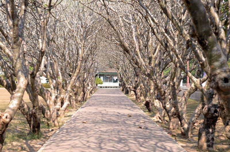 Un cierto lugar en NAN al norte de Tailandia imagen de archivo