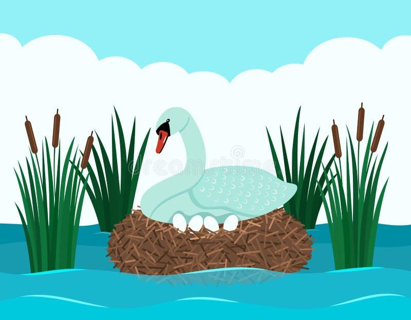 Un cigno bianco grazioso si siede su un insinuante con le uova in uno stagno con le canne Stagno del paesaggio Vettore piano illustrazione di stock