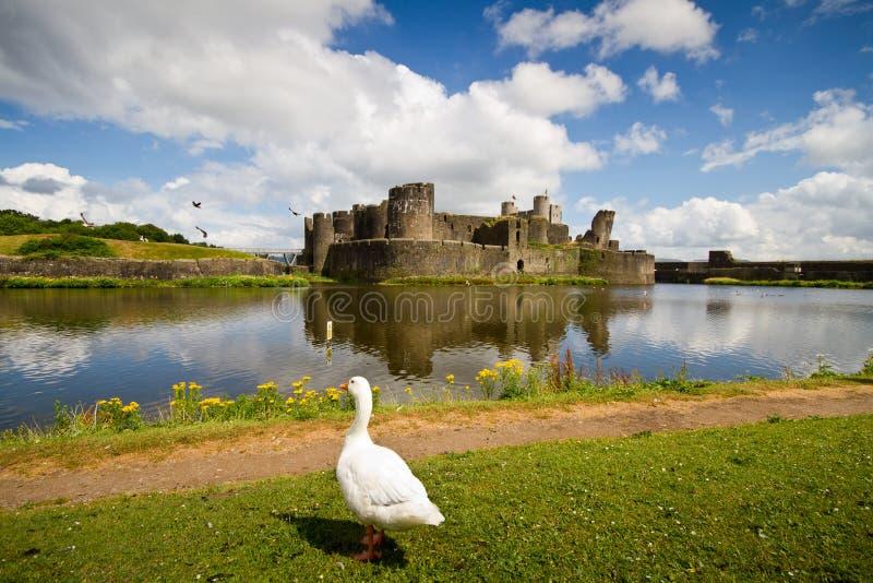 Un cigno che gode della vista del castello di Lingua gallese immagini stock