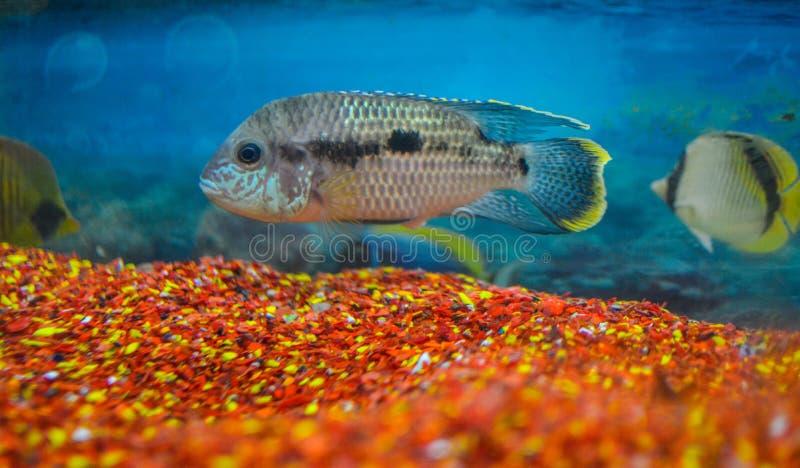 Un clic d'aquarium image stock