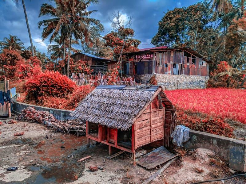 un coin d'une belle image de nature sur l'équateur photo libre de droits