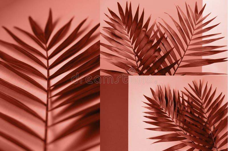 Un collage de fotos del color coralino con las ramas de la palma foto de archivo libre de regalías