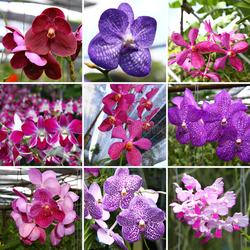 Collage de Orchide foto de archivo