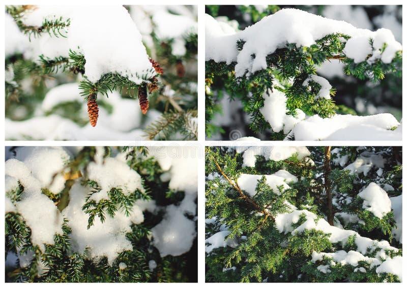 Un collage de las imágenes de la Navidad Fondo hermoso del invierno imagen de archivo