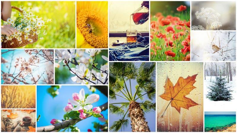 Un collage delle fotografie è le stagioni immagine stock libera da diritti
