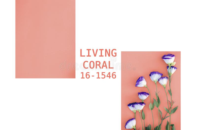 Un collage des photos en couleurs vivant en 2019 le corail photographie stock libre de droits