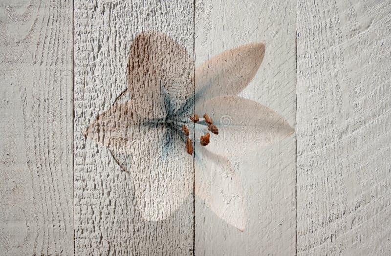 Un collage di un fiore leggero del giglio con le gocce innaffia in un fondo di legno di vetro e grigio immagini stock libere da diritti