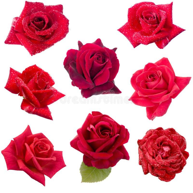 Un collage di otto rose rosse fotografia stock libera da diritti