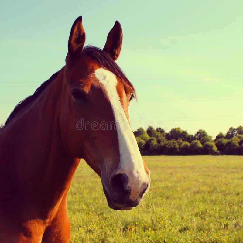 Un colpo capo di un cavallo fotografia stock libera da diritti