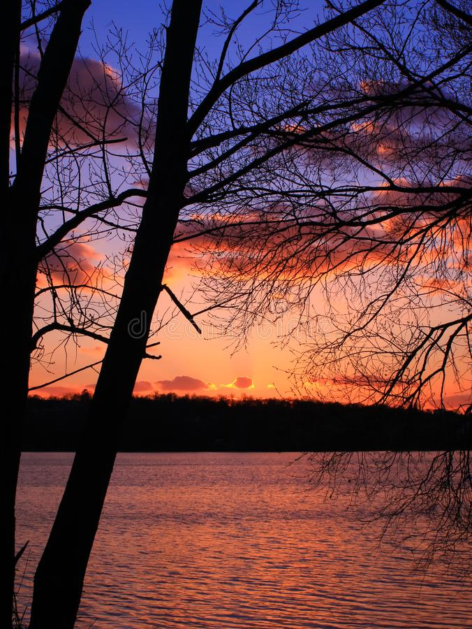Un colpo verticale di due alberi con i rami senza fogliame e cielo variopinto fotografie stock libere da diritti