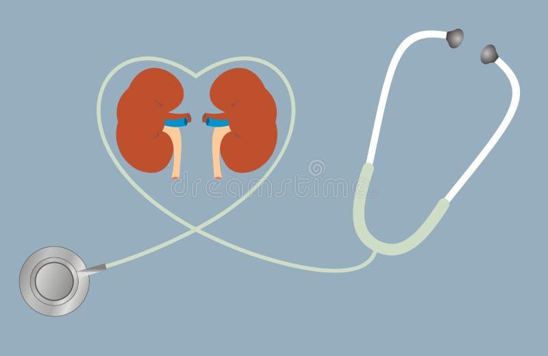 Un concetto per i reni sani Stetoscopio nella figura di cuore royalty illustrazione gratis