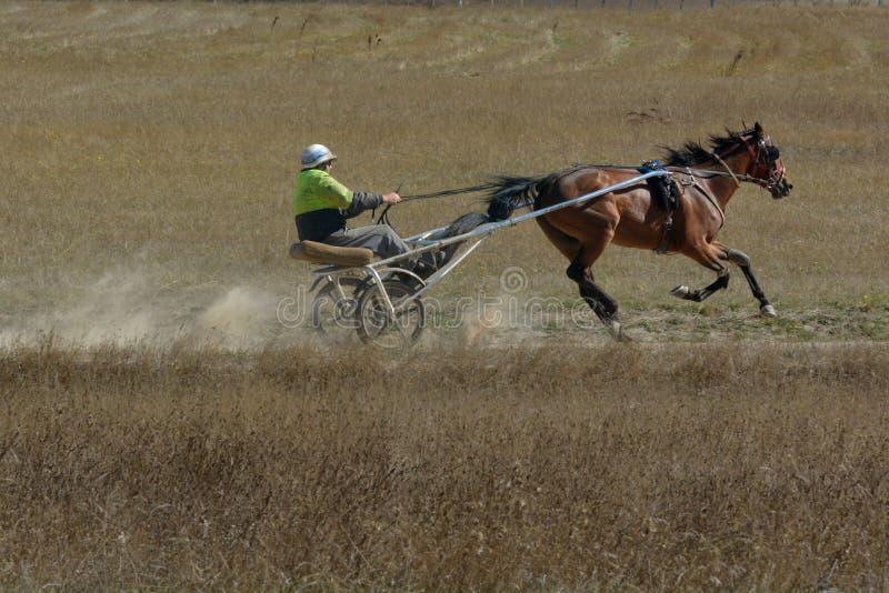 Un conducteur boudeur s'exerçant dans le domaine ouvert en Tasmanie photographie stock libre de droits