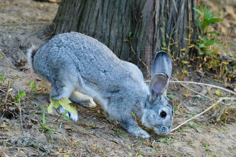 Un conejo en la madera fotografía de archivo libre de regalías