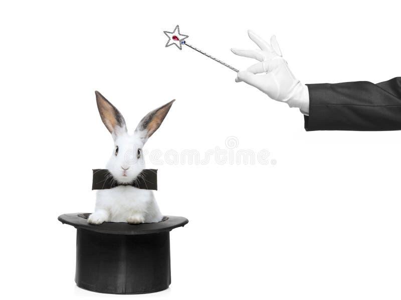 Un conejo en un sombrero y una mano que sostienen una varita mágica imagenes de archivo